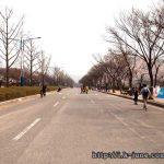 인천대공원 벚꽃축제 갔는데 사람이 매우 많았다.